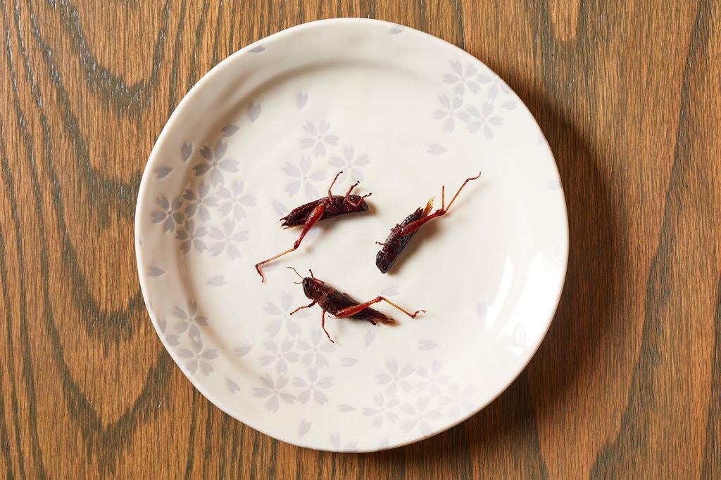 bug_foods_co_uk